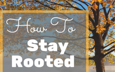 Where are you rooted?