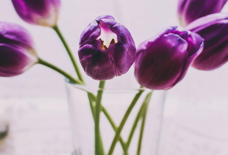 Vase with purple tulip flowers